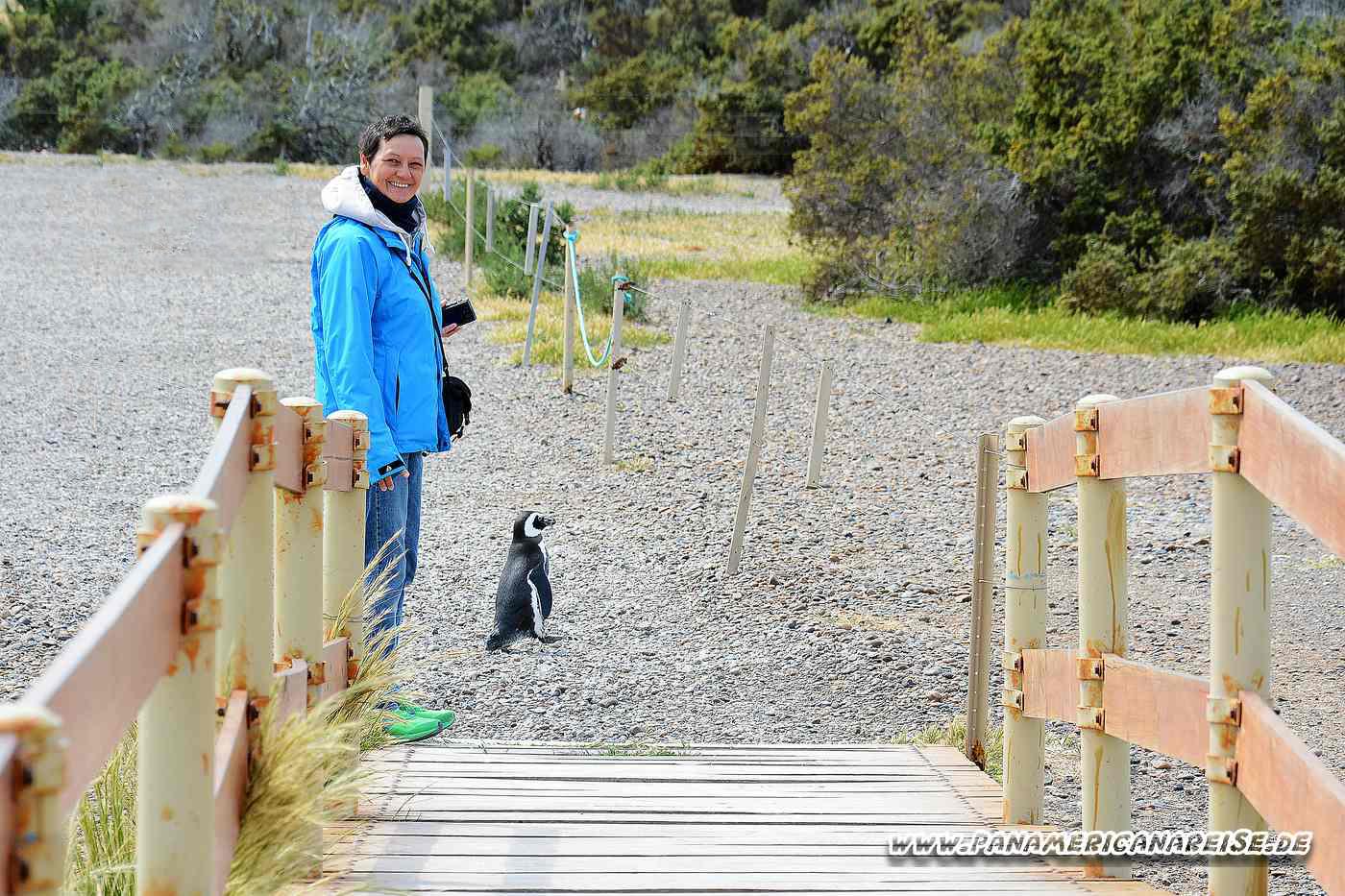 Punta Tombo Pinguinkolonie Argentinien