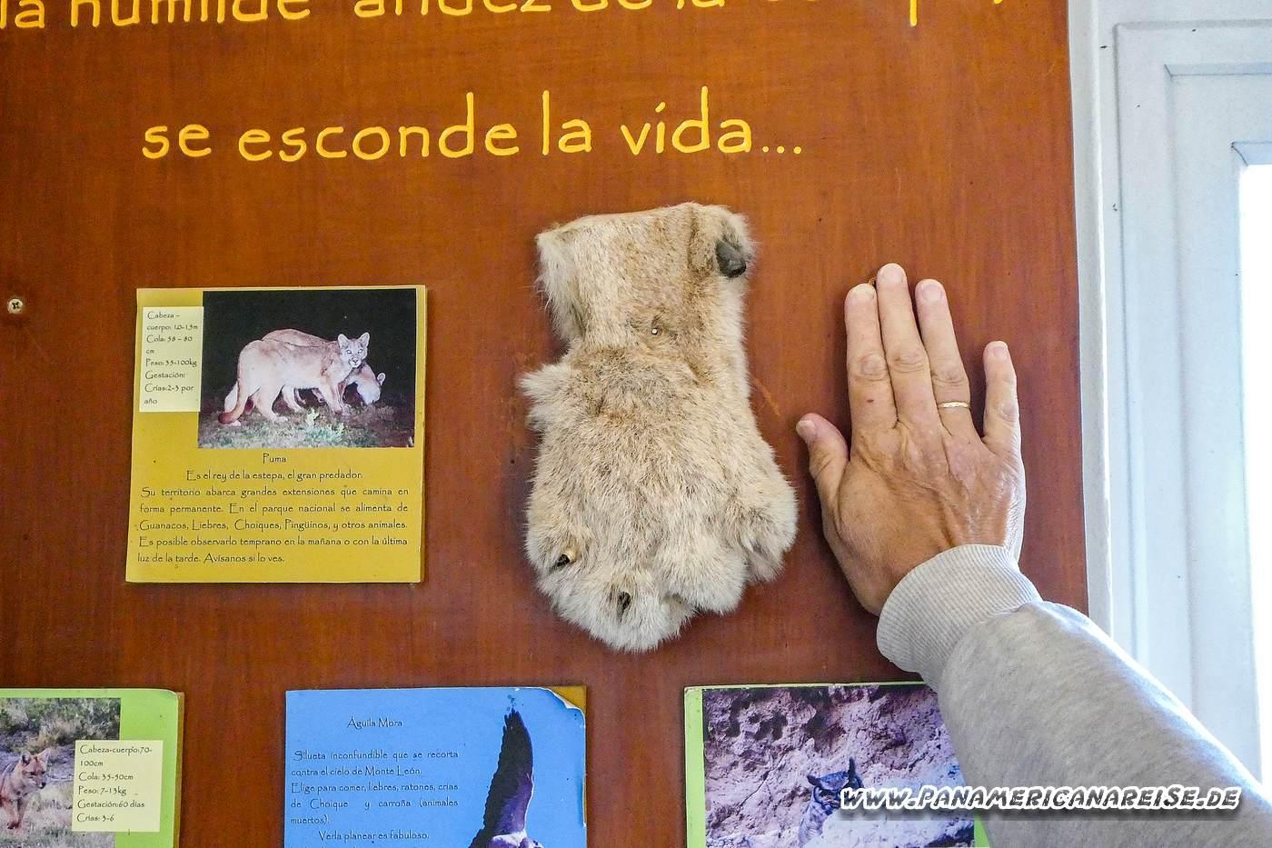 Parque Nacional Monte Leon Argentinien Schafscheererei