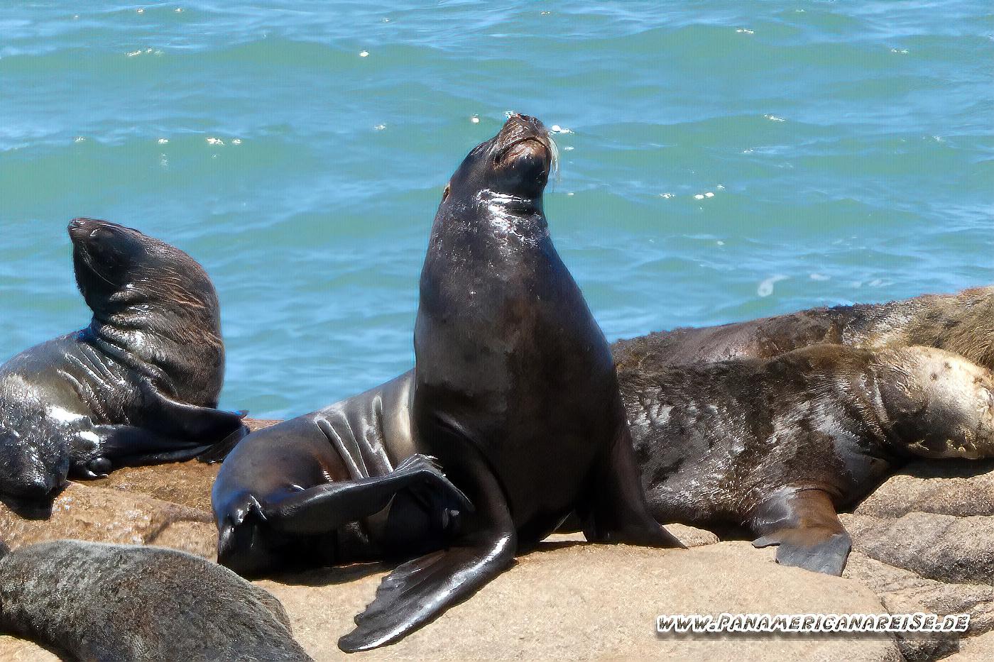 Cabo Polonio Tiere Uruguay